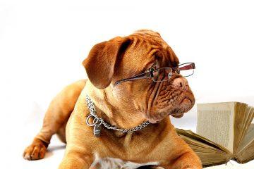 pet friendly office