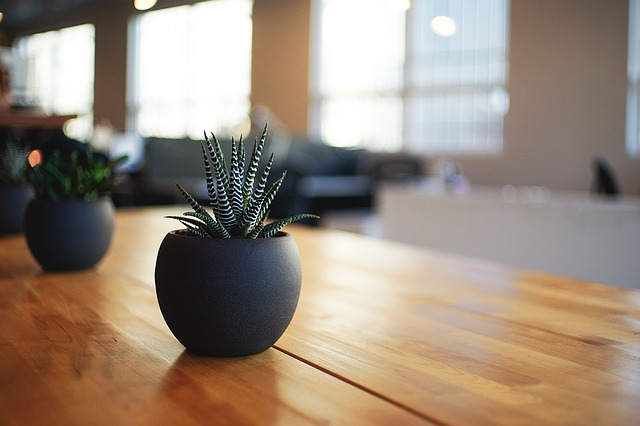 Office Feng shui plant