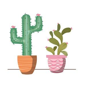 plant desk accessories