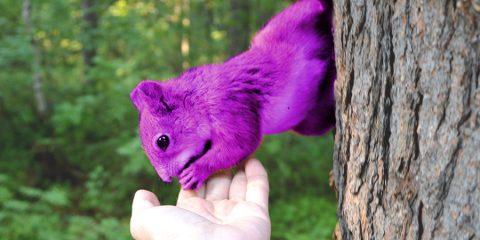 purple squirrels unicorns in recruitment hiring professional HR