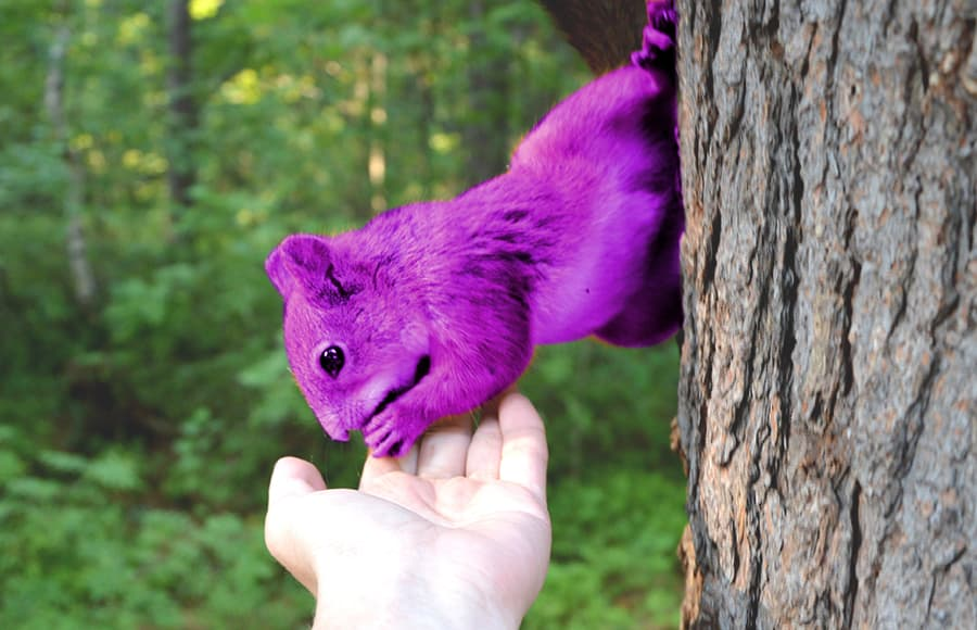 purple squirrels unicorns in recruitment hiring professional HR